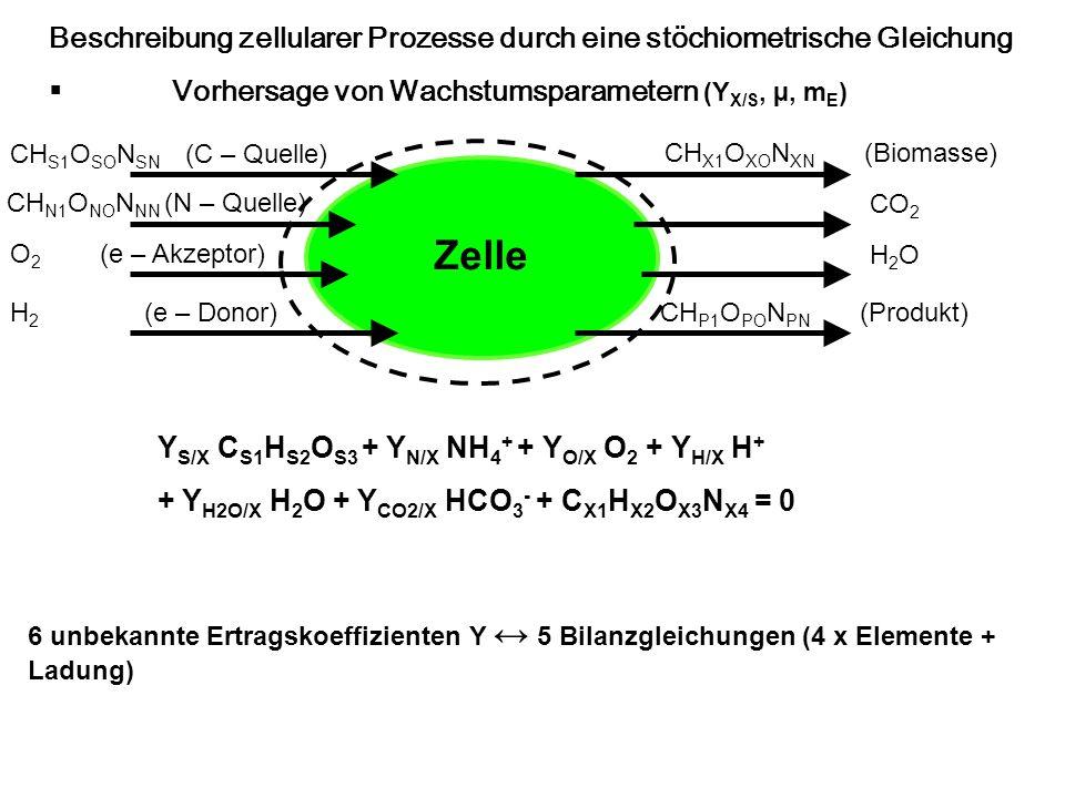 Beschreibung zellularer Prozesse durch eine stöchiometrische Gleichung Vorhersage von Wachstumsparametern (Y X/S, µ, m E ) Zelle CH S1 O SO N SN (C –
