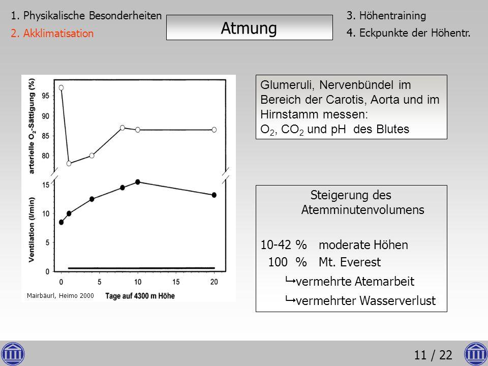 11 / 22 Glumeruli, Nervenbündel im Bereich der Carotis, Aorta und im Hirnstamm messen: O 2, CO 2 und pH des Blutes Steigerung des Atemminutenvolumens