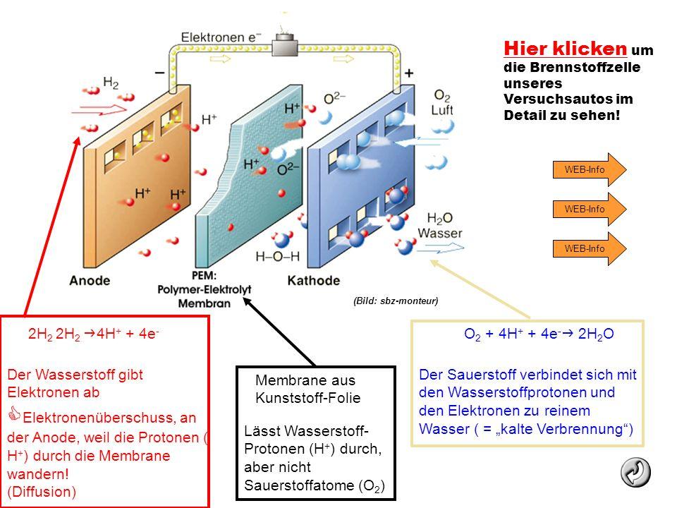 Lässt Wasserstoff- Protonen (H + ) durch, aber nicht Sauerstoffatome (O 2 ) 2H 2 2H 2 4H + + 4e - Der Wasserstoff gibt Elektronen ab Elektronenübersch