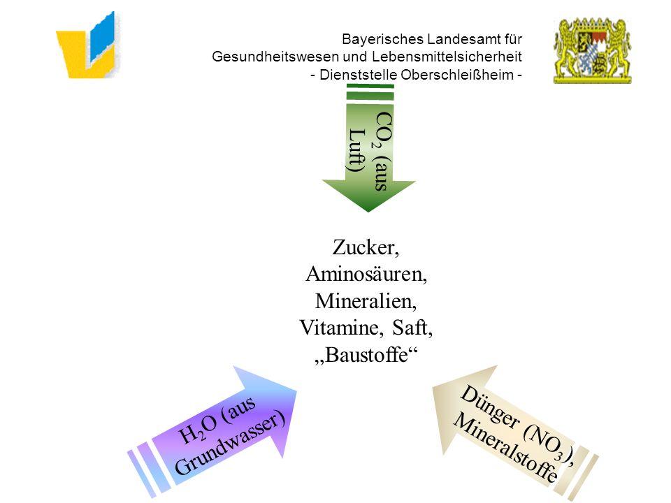 Bayerisches Landesamt für Gesundheitswesen und Lebensmittelsicherheit - Dienststelle Oberschleißheim - CO 2 (aus Luft) H 2 O (aus Grundwasser) Dünger