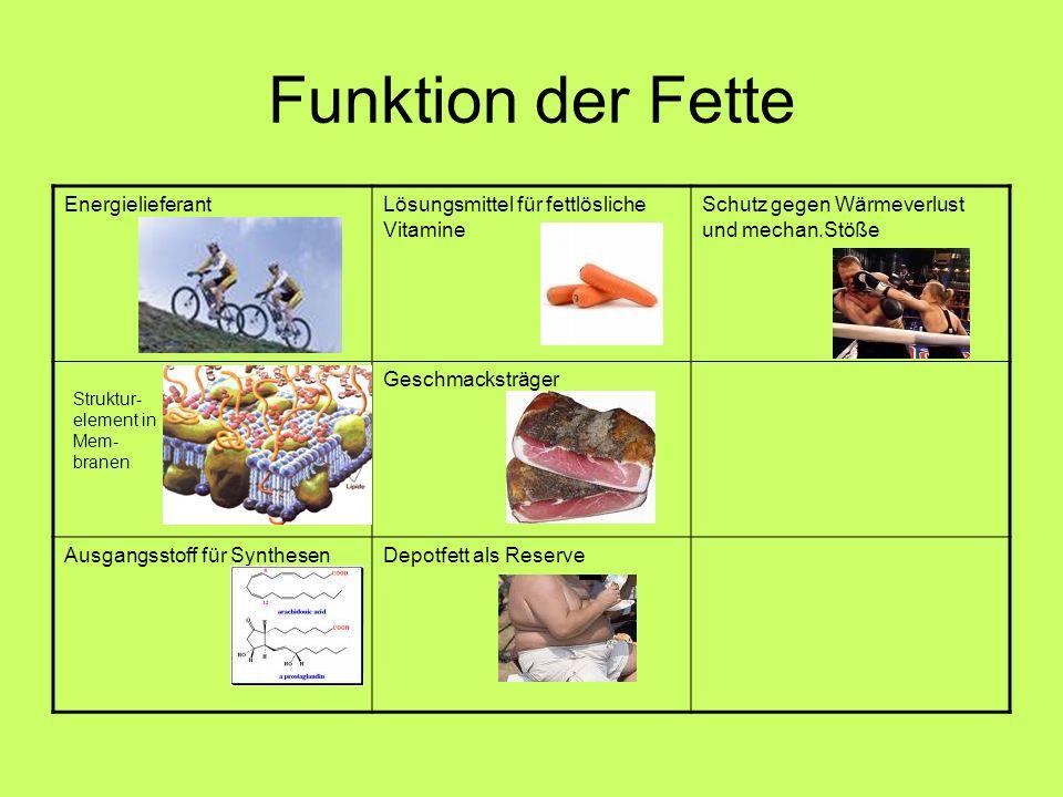 Funktion der Fette EnergielieferantLösungsmittel für fettlösliche Vitamine Schutz gegen Wärmeverlust und mechan.Stöße Geschmacksträger Ausgangsstoff f
