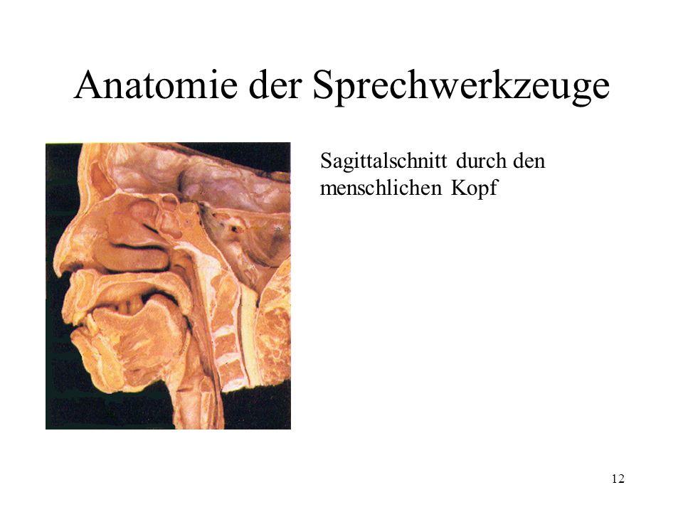 12 Anatomie der Sprechwerkzeuge Sagittalschnitt durch den menschlichen Kopf