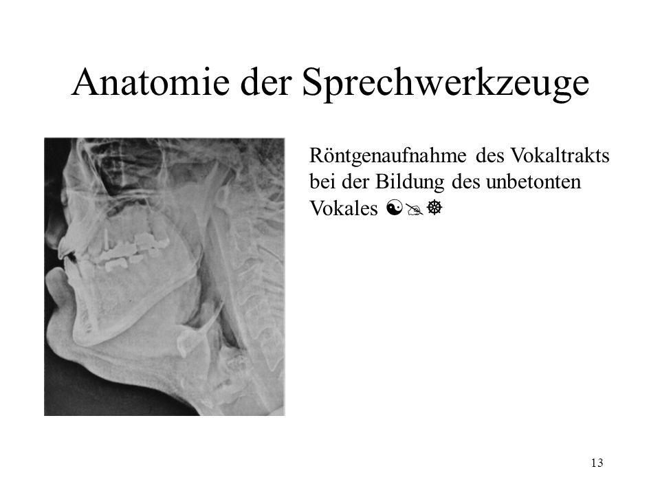 13 Anatomie der Sprechwerkzeuge Röntgenaufnahme des Vokaltrakts bei der Bildung des unbetonten Vokales [@]