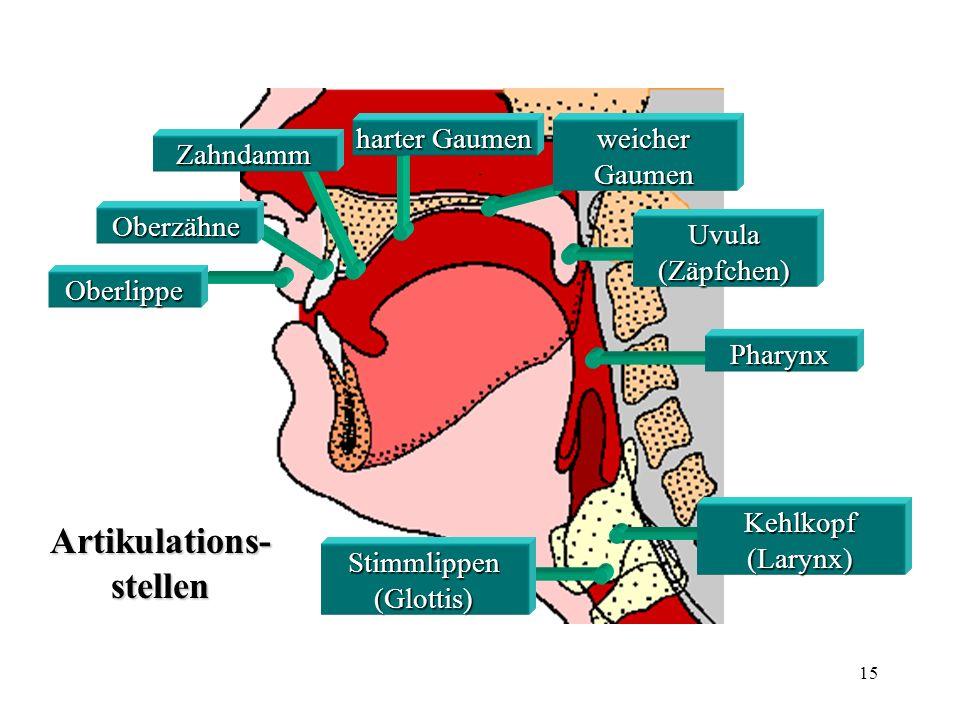 15 Oberlippe Oberzähne Zahndamm harter Gaumen weicher Gaumen Stimmlippen (Glottis) Pharynx Uvula (Zäpfchen) Kehlkopf (Larynx) Artikulations- stellen