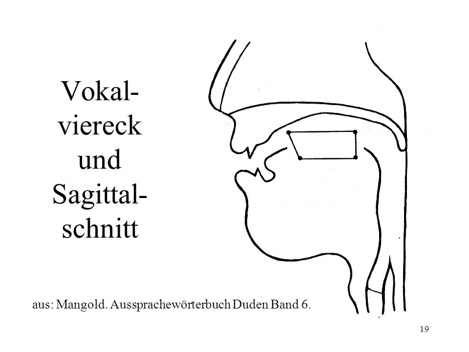 19 Vokal- viereck und Sagittal- schnitt aus: Mangold. Aussprachewörterbuch Duden Band 6.