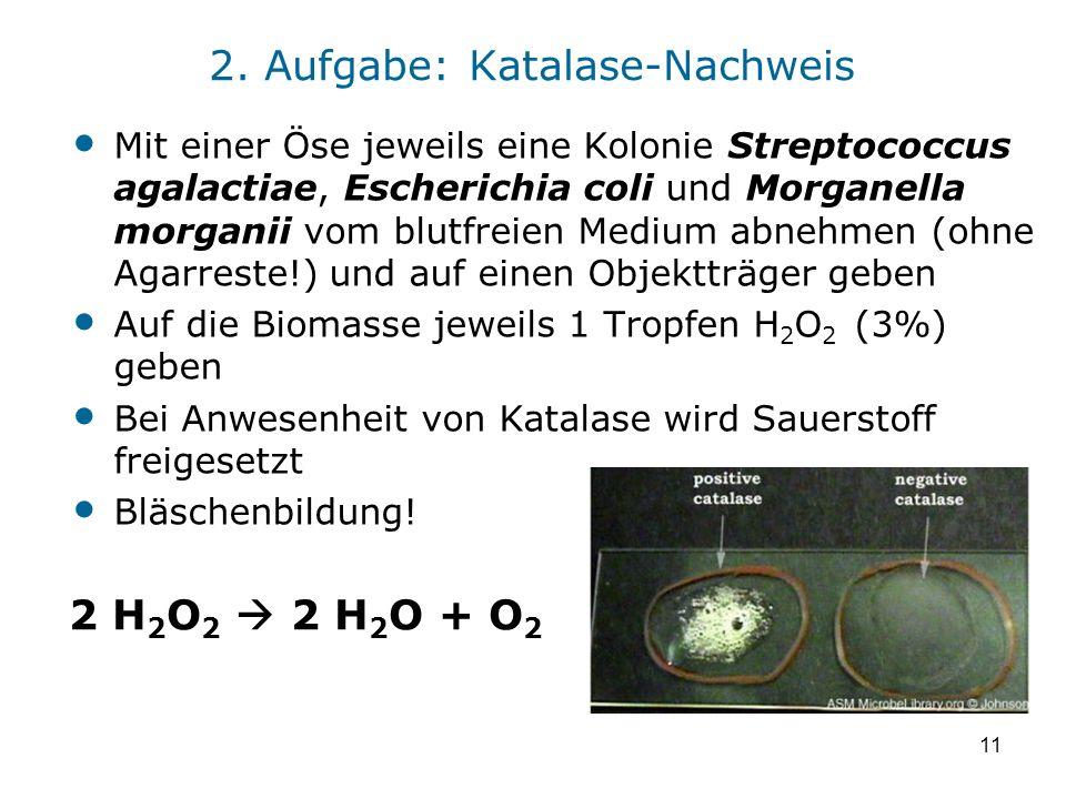 11 2. Aufgabe: Katalase-Nachweis Mit einer Öse jeweils eine Kolonie Streptococcus agalactiae, Escherichia coli und Morganella morganii vom blutfreien