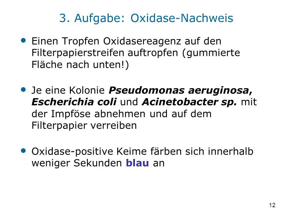 12 3. Aufgabe: Oxidase-Nachweis Einen Tropfen Oxidasereagenz auf den Filterpapierstreifen auftropfen (gummierte Fläche nach unten!) Je eine Kolonie Ps