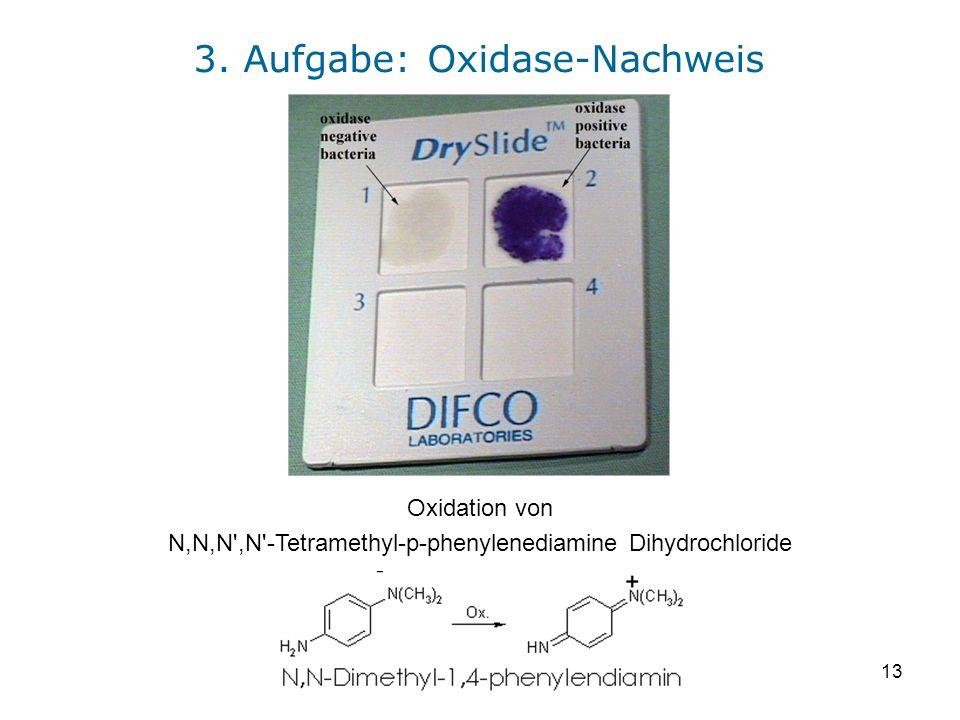 13 Oxidation von N,N,N',N'-Tetramethyl-p-phenylenediamine Dihydrochloride 3. Aufgabe: Oxidase-Nachweis