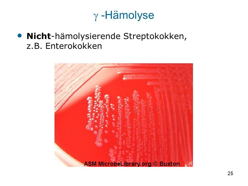 25 Nicht-hämolysierende Streptokokken, z.B. Enterokokken -Hämolyse