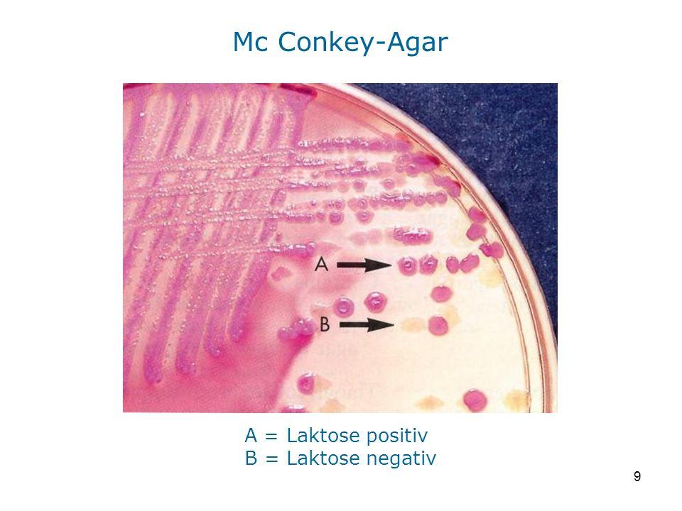 9 Mc Conkey-Agar A = Laktose positiv B = Laktose negativ