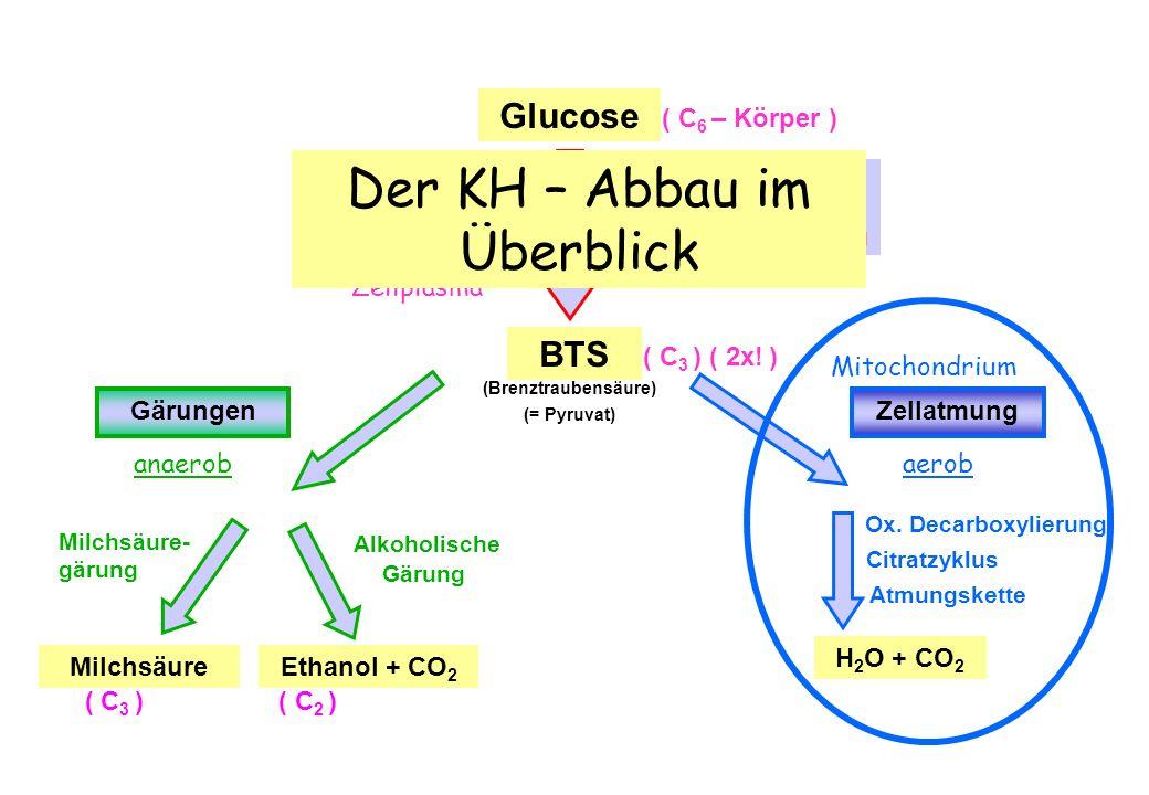 Weiterverarbeitung der Brenztraubensäure bei der Zellatmung Oxidative Decarboxylierung Citratzyklus im Überblick BTSAcetyl-CoA OxalessigsäureZitronensäure C4 C4 C6 C6 CO 2 CoA-SH C5 C5 C4C4 C2C2 C3C3 NAD + NADH/H + 3 NAD + 3 NADH/H + GTP GDP + P i FAD FADH 2 = aktivierte Essigsäure