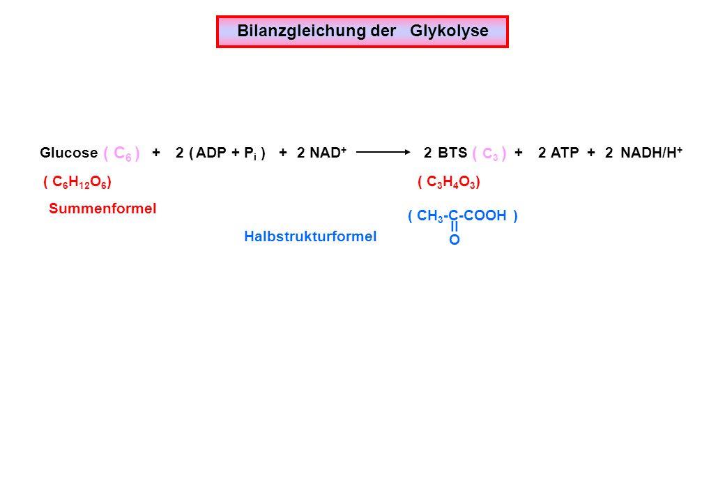 Bilanzgleichung der Glykolyse GlucoseBTS ( ADP + P i )ATP NAD + ( C 6 )( C 3 ) 22222++++ NADH/H + ( C 6 H 12 O 6 )( C 3 H 4 O 3 ) ( CH 3 -C-COOH ) II