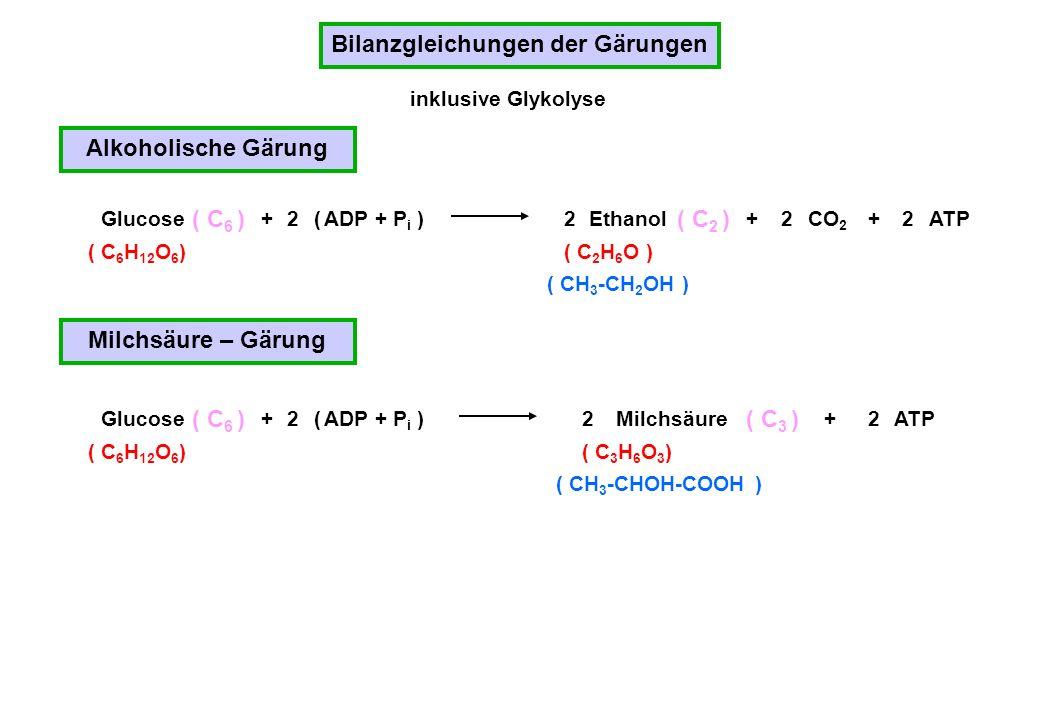 Bilanzgleichungen der Gärungen Alkoholische Gärung ( C 6 H 12 O 6 ) Glucose ( C 6 ) +2 ( ADP + P i )ATPEthanol222 ( C 2 ) ++CO 2 ( CH 3 -CH 2 OH ) Mil