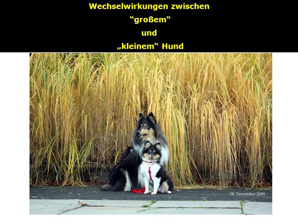 SOL Wechselwirkungen zwischen großem und kleinem Hund