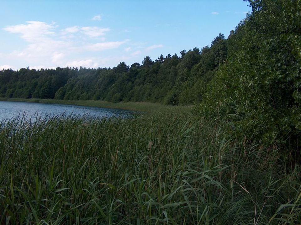 Institut für angewandte Gewässerökologie GmbH Wasser ist unser Element Dystrophe Seen in Brandenburg