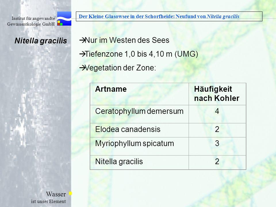Institut für angewandte Gewässerökologie GmbH Wasser ist unser Element Der Kleine Glasowsee in der Schorfheide: Neufund von Nitella gracilis Nur im We