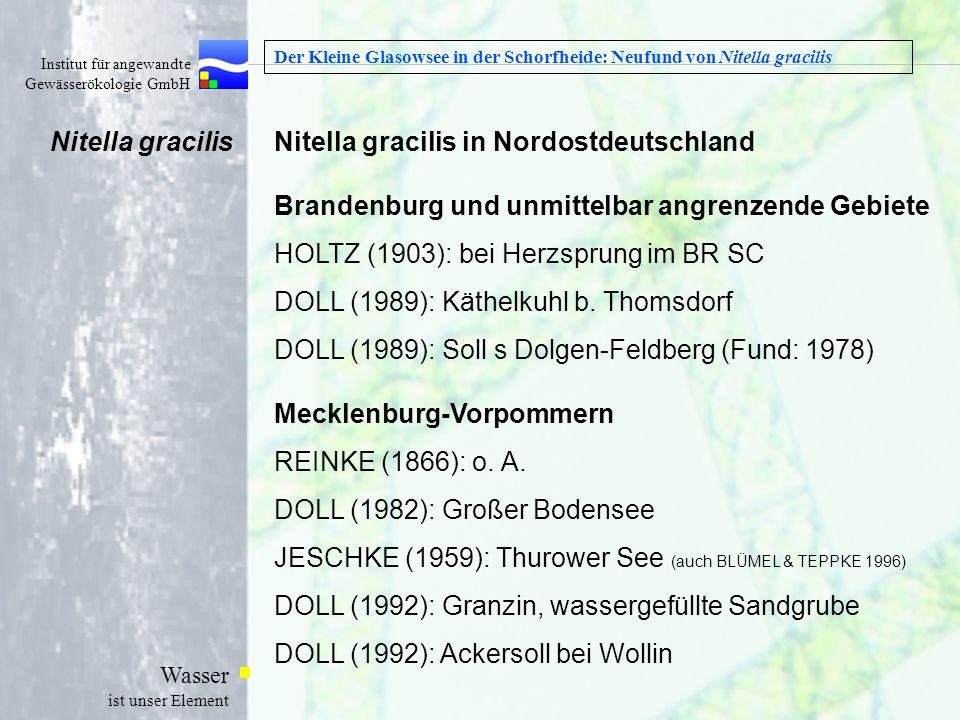 Institut für angewandte Gewässerökologie GmbH Wasser ist unser Element Der Kleine Glasowsee in der Schorfheide: Neufund von Nitella gracilis Nitella g