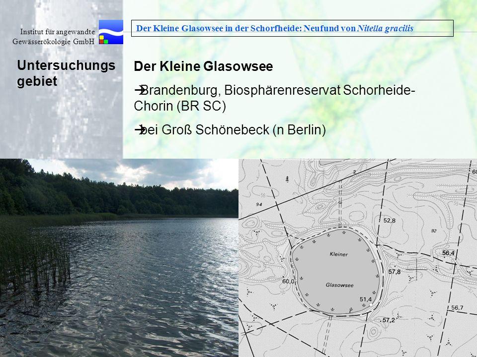 Institut für angewandte Gewässerökologie GmbH Wasser ist unser Element Der Kleine Glasowsee in der Schorfheide: Neufund von Nitella gracilis Der Klein