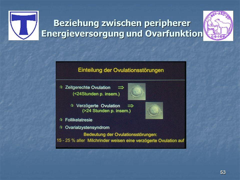 53 Beziehung zwischen peripherer Energieversorgung und Ovarfunktion