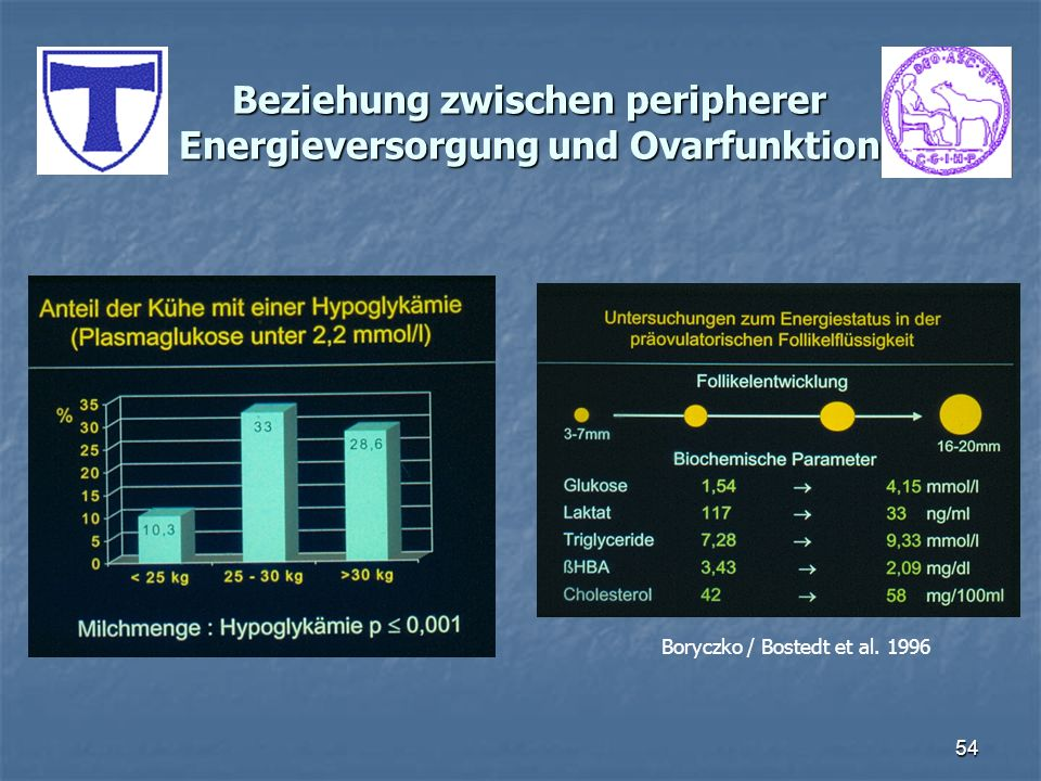 54 Beziehung zwischen peripherer Energieversorgung und Ovarfunktion Boryczko / Bostedt et al. 1996