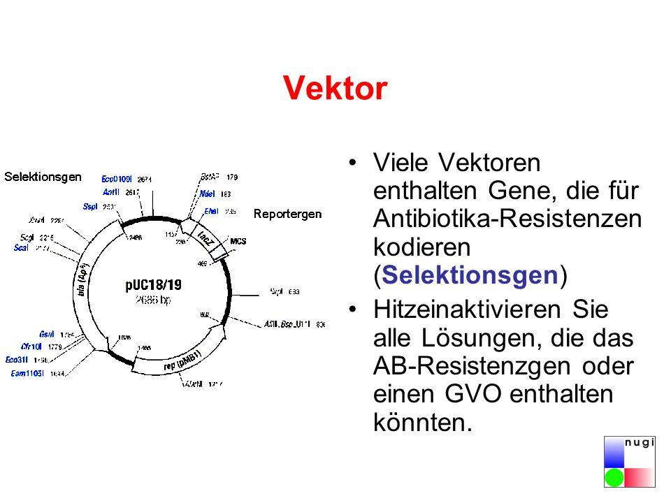 Vektor Viele Vektoren enthalten Gene, die für Antibiotika-Resistenzen kodieren (Selektionsgen) Hitzeinaktivieren Sie alle Lösungen, die das AB-Resistenzgen oder einen GVO enthalten könnten.