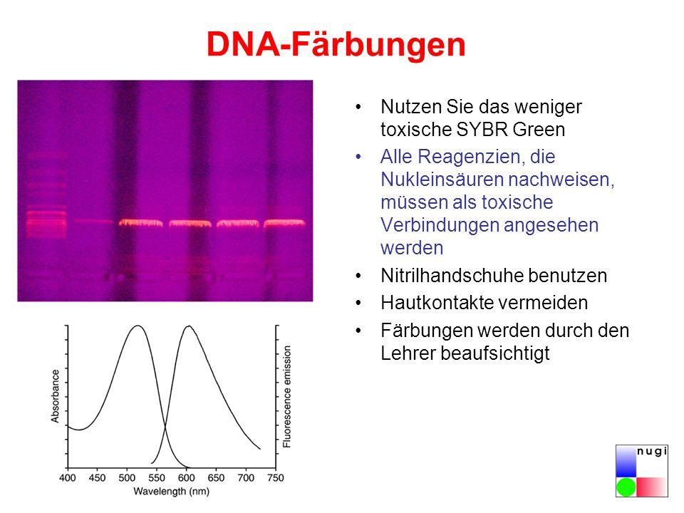 DNA-Färbungen Nutzen Sie das weniger toxische SYBR Green Alle Reagenzien, die Nukleinsäuren nachweisen, müssen als toxische Verbindungen angesehen werden Nitrilhandschuhe benutzen Hautkontakte vermeiden Färbungen werden durch den Lehrer beaufsichtigt