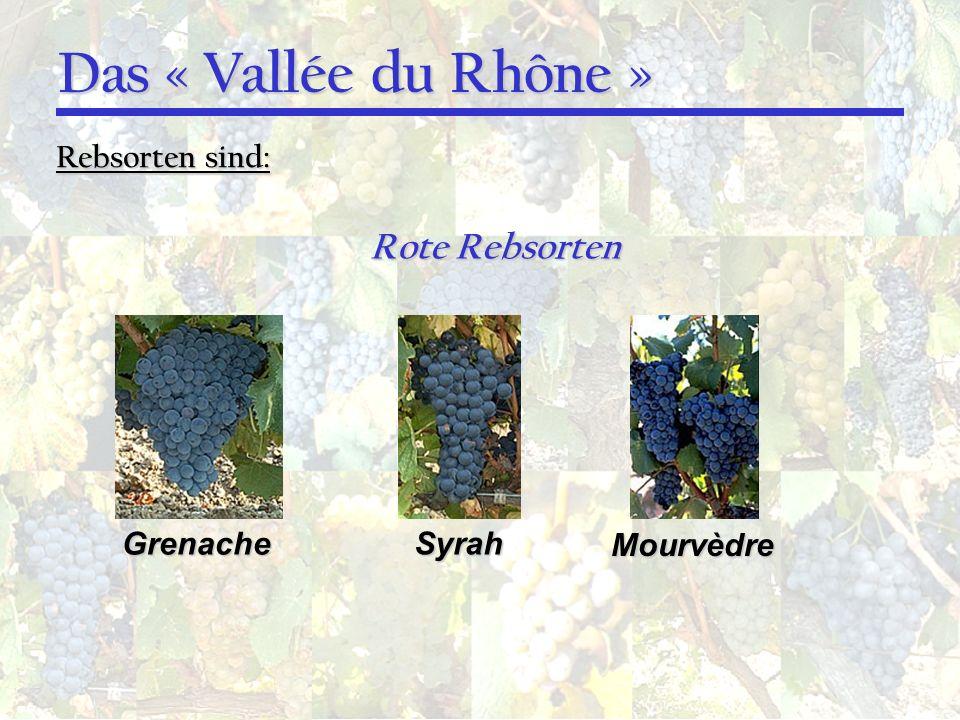 Das « Vallée du Rhône » Rebsorten sind: Grenache Syrah Mourvèdre Rote Rebsorten