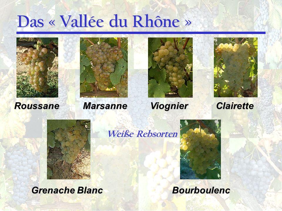 Das « Vallée du Rhône » RoussaneMarsanneViognierClairette Grenache Blanc Bourboulenc Weiße Rebsorten