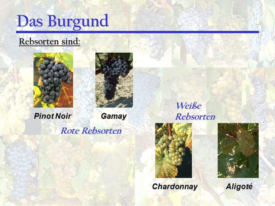 Das Burgund Rebsorten sind: Pinot Noir Gamay ChardonnayAligoté Rote Rebsorten Weiße Rebsorten