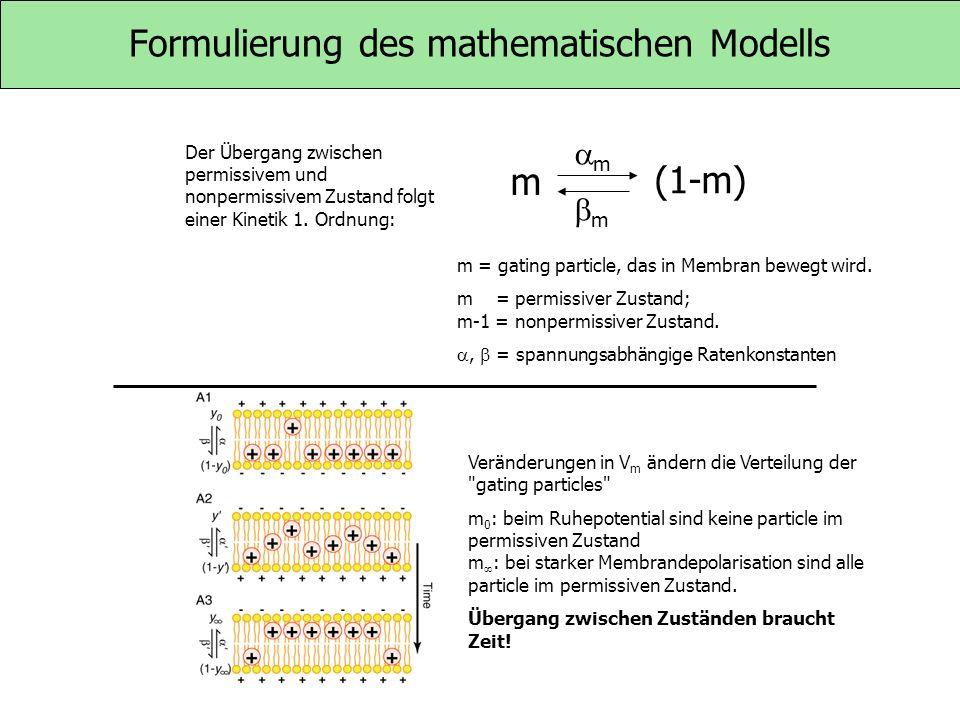 Formulierung des mathematischen Modells m = gating particle, das in Membran bewegt wird. m = permissiver Zustand; m-1 = nonpermissiver Zustand., = spa