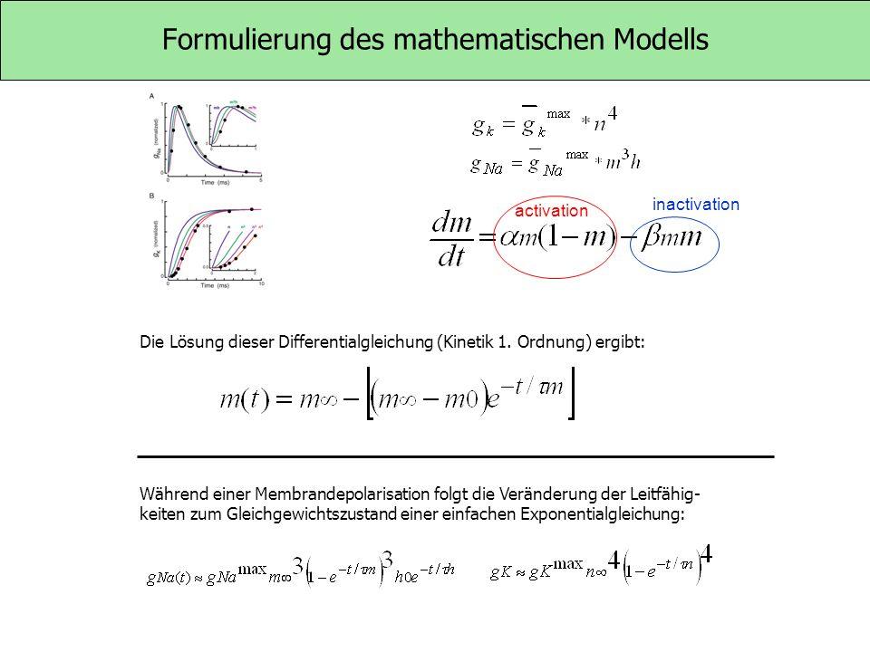 Formulierung des mathematischen Modells Während einer Membrandepolarisation folgt die Veränderung der Leitfähig- keiten zum Gleichgewichtszustand eine