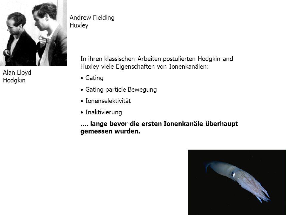 Alan Lloyd Hodgkin Andrew Fielding Huxley In ihren klassischen Arbeiten postulierten Hodgkin and Huxley viele Eigenschaften von Ionenkanälen: Gating G