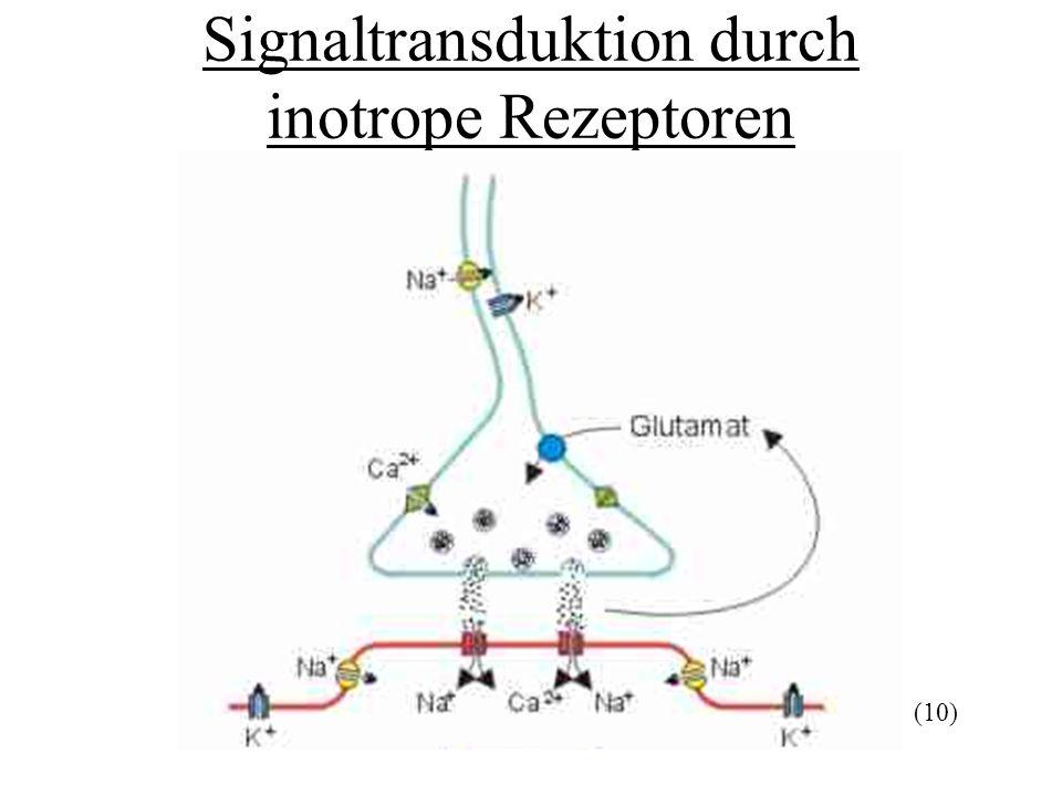 Signaltransduktion durch inotrope Rezeptoren (10)