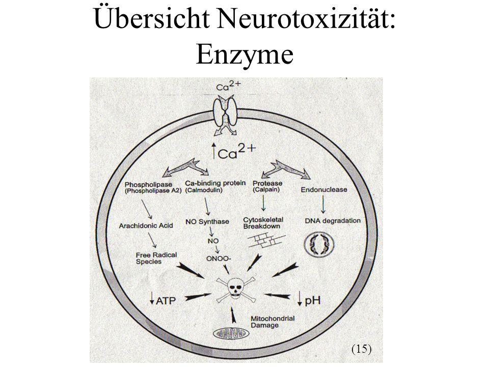 Übersicht Neurotoxizität: Enzyme (15)