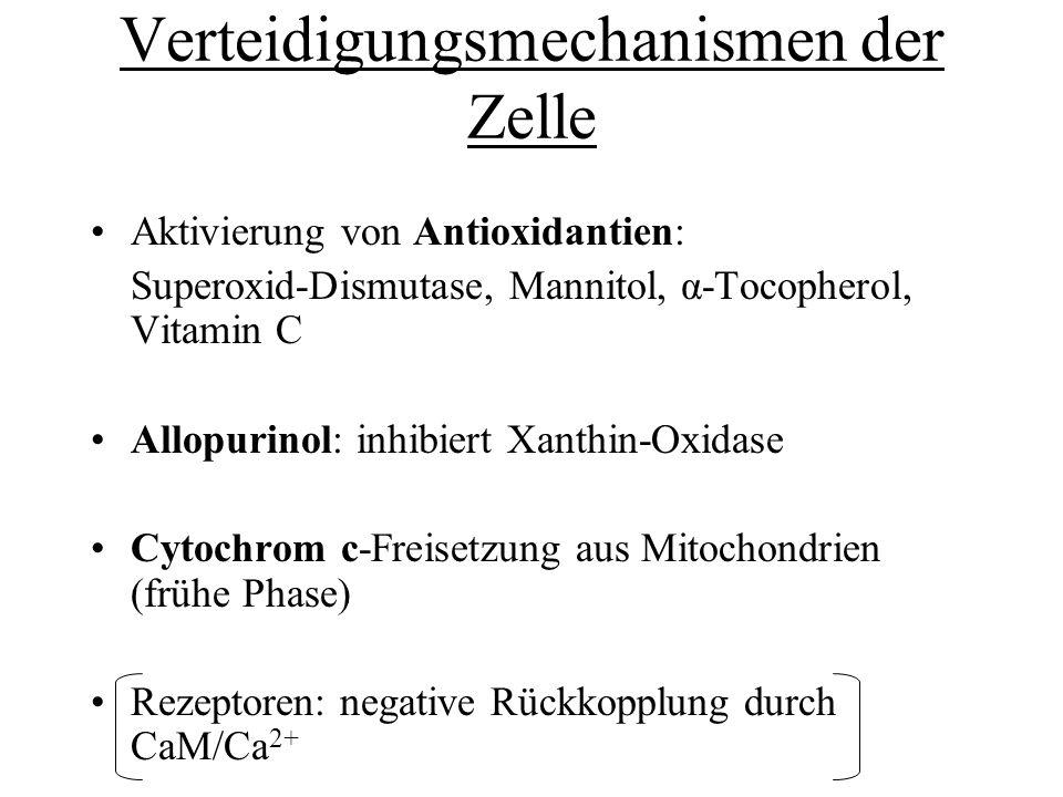 Verteidigungsmechanismen der Zelle Aktivierung von Antioxidantien: Superoxid-Dismutase, Mannitol, α-Tocopherol, Vitamin C Allopurinol: inhibiert Xanth