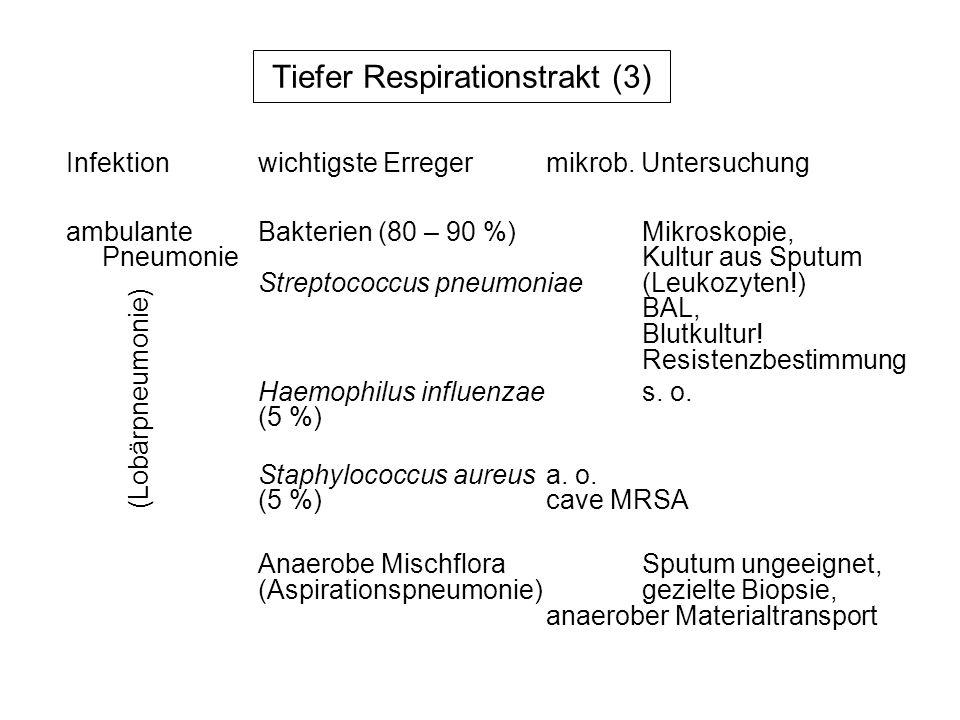 Tiefer Respirationstrakt (3) ambulanteBakterien (80 – 90 %)Mikroskopie, Pneumonie Kultur aus Sputum Streptococcus pneumoniae(Leukozyten!) BAL, Blutkul