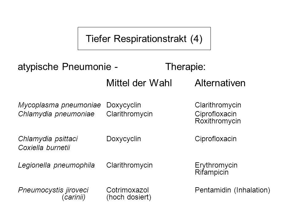Tiefer Respirationstrakt (4) atypische Pneumonie - Therapie: Mittel der WahlAlternativen Mycoplasma pneumoniaeDoxycyclinClarithromycin Chlamydia pneum