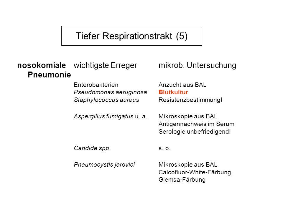 Tiefer Respirationstrakt (5) nosokomiale wichtigste Erregermikrob. Untersuchung Pneumonie EnterobakterienAnzucht aus BAL Pseudomonas aeruginosaBlutkul