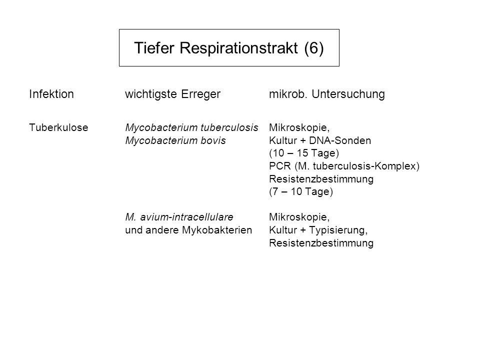 Tiefer Respirationstrakt (6) Infektionwichtigste Erregermikrob. Untersuchung TuberkuloseMycobacterium tuberculosisMikroskopie, Mycobacterium bovisKult