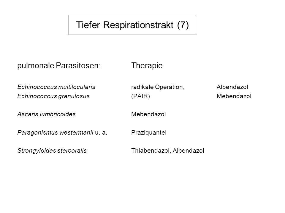 Tiefer Respirationstrakt (7) pulmonale Parasitosen:Therapie Echinococcus multilocularisradikale Operation,Albendazol Echinococcus granulosus(PAIR)Mebe