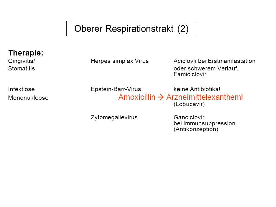 Oberer Resprationstrakt (3) Bakterien: Pharyngitis/TonsillitisStreptococcus pyogenes Kultur,Antigennachweis meist Gruppe A AnginaTreponema vincentii Mikroskopie, Plaut-Vincenti+ fusioforme Stäbchen Rachenabstrich DiphtherieCorynebacterium diphtheriae Erreger+Toxinnachweis chron.
