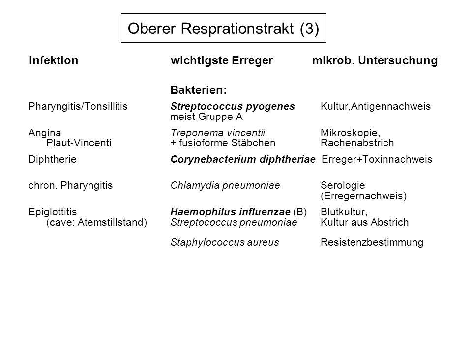 Oberer Resprationstrakt (3) Bakterien: Pharyngitis/TonsillitisStreptococcus pyogenes Kultur,Antigennachweis meist Gruppe A AnginaTreponema vincentii M