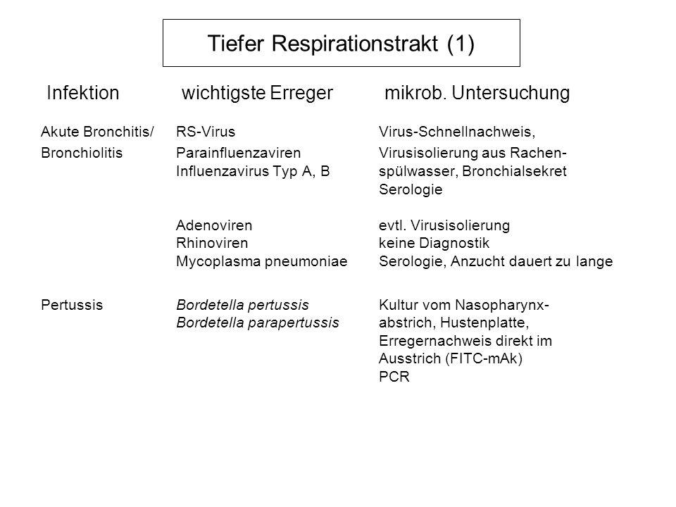 Tiefer Respirationstrakt (1) Therapie Akute Bronchitis/Bronchiolitis: RS-VirusRibavirin in schweren Fällen (nur bei Kindern) Influenzavirus Typ A, BZanamivir (Inhalation zu Beginn der Erkrankung) Mycoplasma pneumoniaeMakrolide, Chinolone Pertussis:Bordetella pertussisMakrolide (2 Wochen) Bodetella parapertussis(Clarithromycin 12 mg/kg/d)