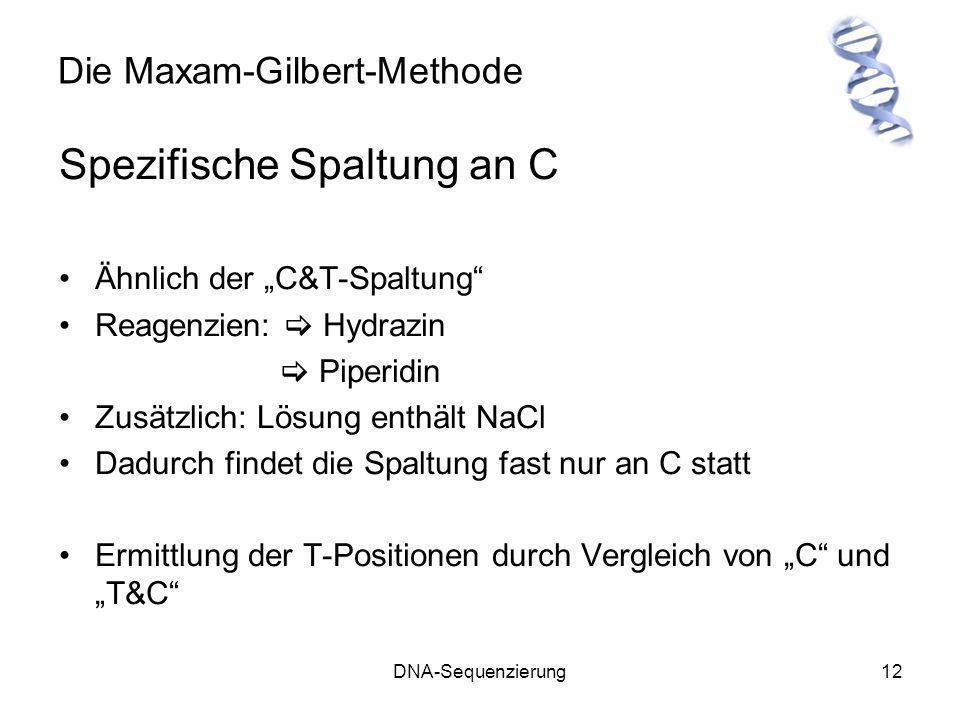 DNA-Sequenzierung12 Die Maxam-Gilbert-Methode Spezifische Spaltung an C Ähnlich der C&T-Spaltung Reagenzien: Hydrazin Piperidin Zusätzlich: Lösung ent