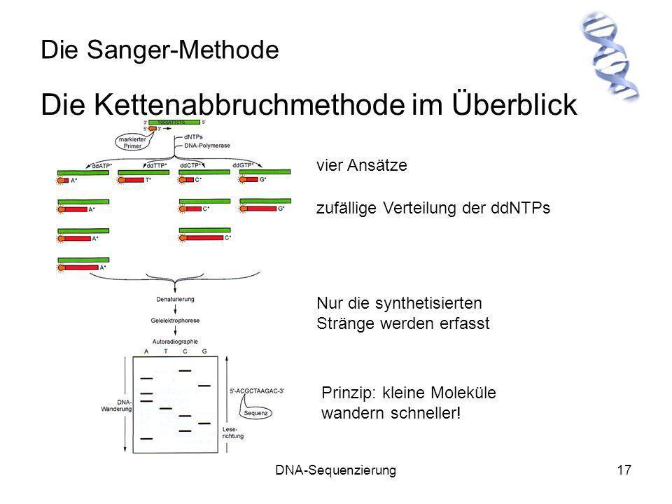 DNA-Sequenzierung17 Die Sanger-Methode Die Kettenabbruchmethode im Überblick vier Ansätze zufällige Verteilung der ddNTPs Nur die synthetisierten Strä
