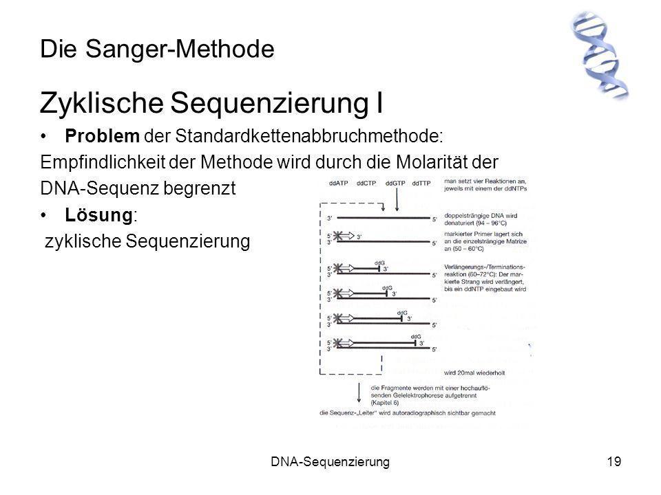 DNA-Sequenzierung19 Die Sanger-Methode Zyklische Sequenzierung I Problem der Standardkettenabbruchmethode: Empfindlichkeit der Methode wird durch die