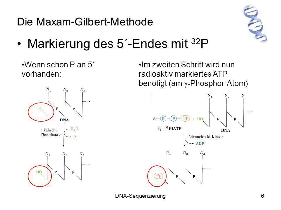 DNA-Sequenzierung6 Die Maxam-Gilbert-Methode Markierung des 5´-Endes mit 32 P Wenn schon P an 5´ vorhanden: Im zweiten Schritt wird nun radioaktiv mar