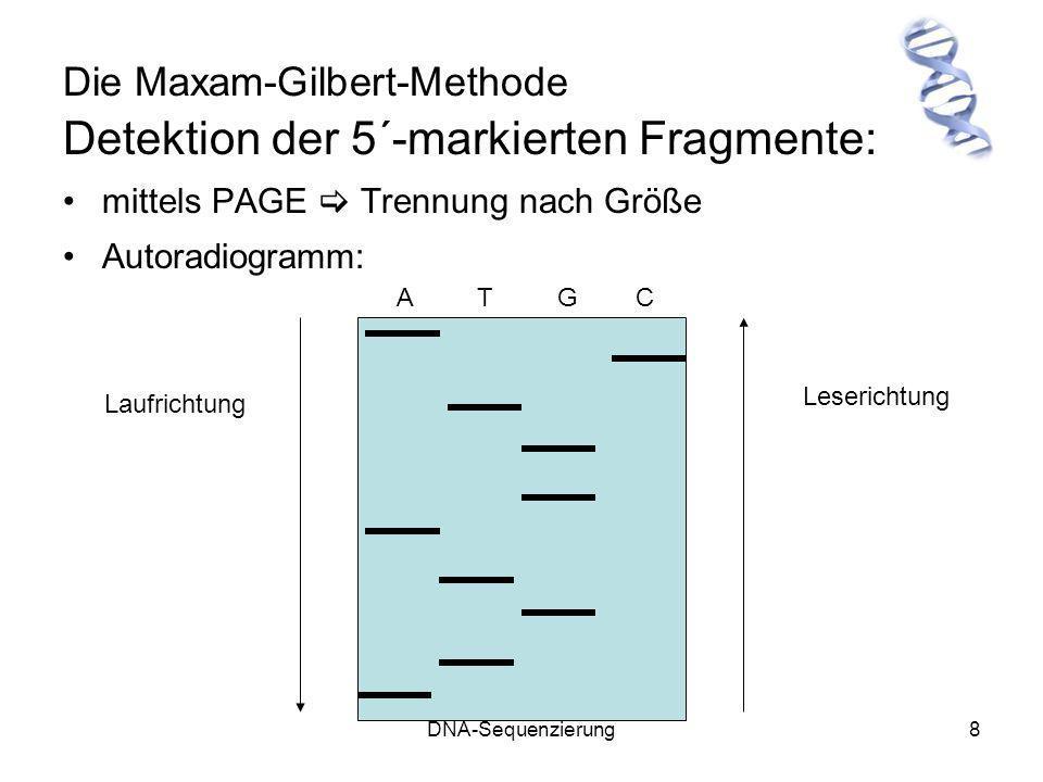 DNA-Sequenzierung8 Die Maxam-Gilbert-Methode Detektion der 5´-markierten Fragmente: mittels PAGE Trennung nach Größe Autoradiogramm: A T G C Laufricht