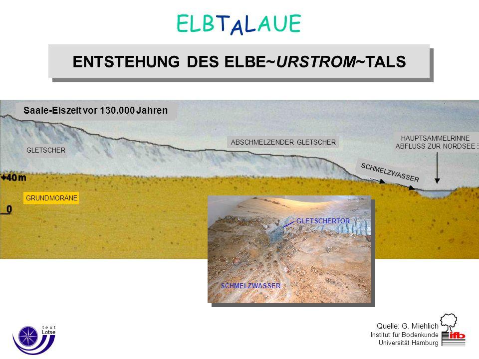 Quelle: G. Miehlich Institut für Bodenkunde Universität Hamburg ENTSTEHUNG DES ELBE~URSTROM~TALS A ELBT LAUE Lotse t e x t Saale-Eiszeit vor 130.000 J