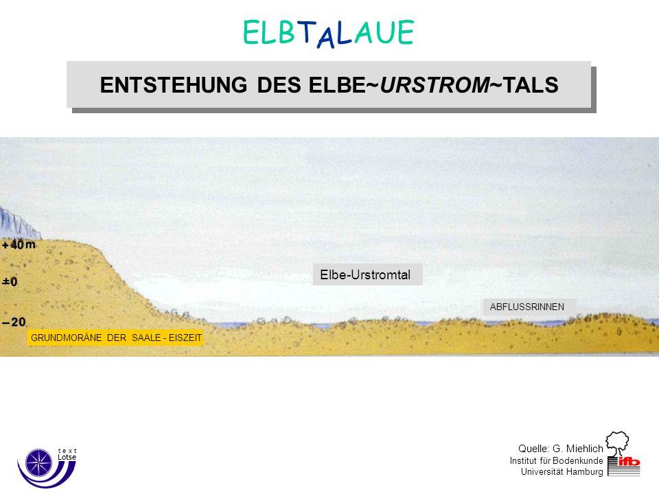 Quelle: G. Miehlich Institut für Bodenkunde Universität Hamburg ENTSTEHUNG DES ELBE~URSTROM~TALS A ELBT LAUE Lotse t e x t Ende der Weichsel–Eiszeit c